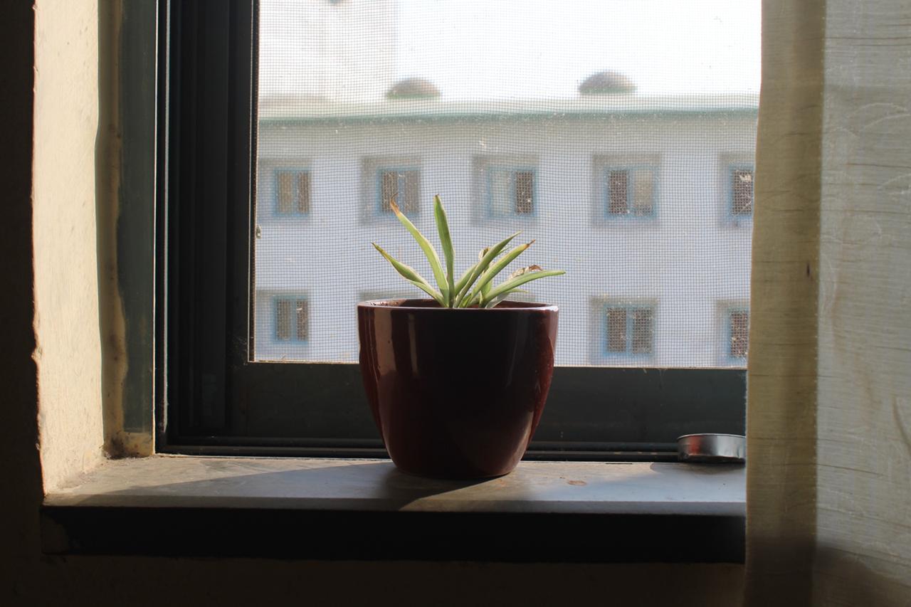 A plant on my windowsill
